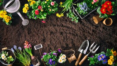 15 x gardening tips for April