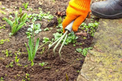 How to get rid of garden weeds