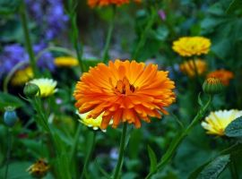 Annuals for wildlife